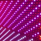 Single-Purple SMD LED de color en el interior del módulo de pantalla