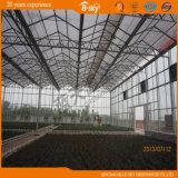 Planting Vegetables&Fruits를 위한 Venlo Type 다중 Span Glass Greenhouse