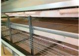 Автоматическая клетка горячих/холодной гальванизации умелая технологии батареи бройлера цыпленка для фермы (тип рамки h)