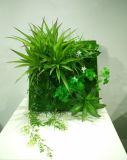 Plantas y flores artificiales de la planta suculenta Gu-SD-15133