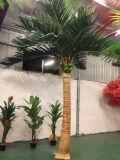 Piante e fiori artificiali della palma reale Gu-SL63656 dell'Indonesia