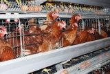 دواجن & [ليفستوك فرم] يشبع آليّة طبقة دجاجة قفص تجهيز