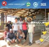 Batería de acero de la jaula de la capa de las aves de corral pollo aperos de labranza