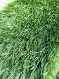 Ковер травы Artificia естественного ребенка взгляда содружественный
