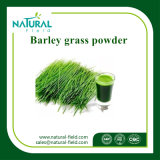 オオムギ草のエキスの/Barleyの草ジュースの粉