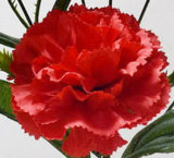 Única haste flor artificial/plástica/de seda do cravo (XF31006)