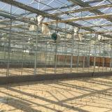 고품질 최신 판매 다중 경간 유리제 녹색 집