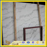 Statuario/Guangxi Witte Marmeren Plak voor de Tegel van de Bevloering/Countertop van de Muur