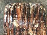 Illex Kalmar (Jigger, Meer eingefroren)