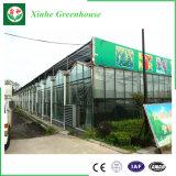 Invernadero de cristal de la venta caliente para agrícola y comercial