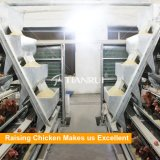 заводская цена продажи с возможностью горячей замены автоматического куриное мясо птицы отсек для батареи слои