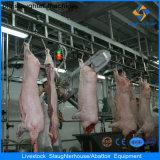 Linha da matança do porco no matadouro Small-Sized do porco