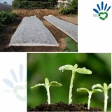 Sacchetti non tessuti del polipropilene biodegradabile di Seeding, agricoltura del Nonwoven di Spunbonded del polipropilene della materia prima