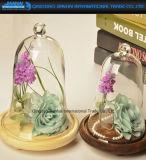 Стеклянные колпаки куполов Cloches бессмертной консервации цветка стеклянные