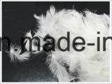 2-4 cm gewaschene weiße Ente-Feder für Tröster (IDFL, USA-2000, EN12934, JIS, GB/T17685-2016)