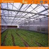 높은 수확량 폴리탄산염 장 다중 경간 온실