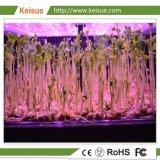 Azienda agricola verticale della famiglia per i pomodori dell'ortaggio fresco/fragola/ciliegia