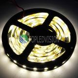 Alto buon indicatore luminoso luminoso della striscia 60LEDs/M di prezzi SMD5054 LED