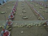 Sistema bebendo do bocal dobro automático do selo de Moder para a galinha da galinha/reprodutor de grelha/galinha da camada