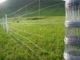 전문가에 의하여 매듭을 짓는 대초원 가축 필드 담에 의하여 길쌈되는 철사 그물세공