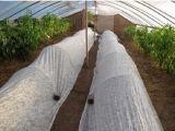 Nontissé Spunbonded respirants pp pour l'agriculture couvre de récolte