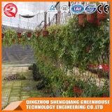 농업 다중 경간 정원 강화 유리 녹색 집
