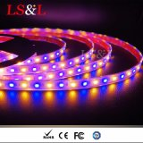 Color ambarino claro ligero impermeable de Ledstrip RGB que cambia luces de DIY