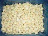 새로운 작물 신선한 거피된 마늘