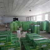 Сбывание свежего естественного чеснока высокого качества поставкы фабрики горячее