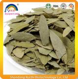 L'estratto cinese del foglio della senna delle erbe per perde il peso