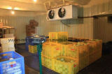 Frutas Sala Fria/ congelador para produtos hortícolas