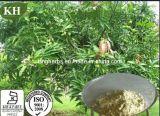 Estratto naturale Mangiferin 90%, 95% del foglio del mango della pianta da HPLC