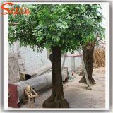 Albero artificiale del Ficus della vetroresina sempreverde delle piante ornamentali