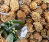 Estratto Yi Zhi Ren di Oxyphylla di Alpinia per gli alimenti ed il supplemento