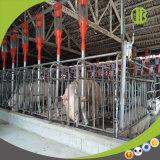 Système alimentant à haut rendement employant dans la ferme de porc moderne