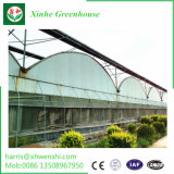 ベテランおよび優雅なマルチスパンのトンネルの温室