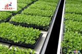 Рост растений в выбросы парниковых газов