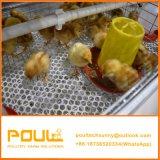 Petite automatique Chick poulette un type de système de la cage de poulet