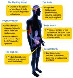Men를 위한 Letrozol Pct Femara Anti Estrogen Steroids Aromatase Inhibitors