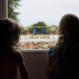 عالة أكريليكيّ نافذة عصفور مغذية مع فائقة قوّيّة مصّ فنجان