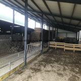 A alimentação das vacas de aço Arena, Galpão de gado com preço barato