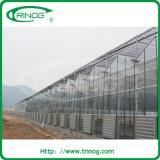 Im Garten arbeitenMultispan Glasgewächshaus (XS-GL9600/12000Venlo)