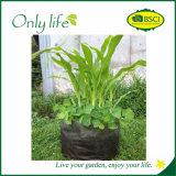 Il Nonwoven grigio di verdure ampiamente usato mobile di Onlylife coltiva il sacchetto