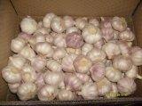 Scatola che imballa aglio bianco normale (5.0cm ed aumentano)