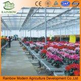 Seedbed di attività di sistema di coltura idroponica per le serre di vetro di verdure moderne