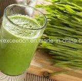 Порошок травы ячменя 100% водорастворимый органический & порошок травы пшеницы в большом части