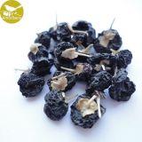 De Organische Natuurlijke Wilde Zwarte Goji Bes van Amorberry Droge Lycii Wolfberry Lycium Ruthenicum
