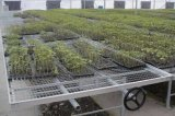 溶接された金網が付いている農業の温室のSeedbed