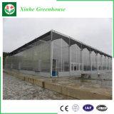 Invernadero comercial de la hoja de la PC del invernadero de la alta calidad con el marco de acero galvanizado del bajo costo