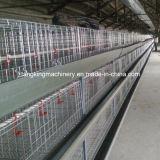 Il pollo delle gabbie di batteria del pollame della strumentazione di pollicultura mette in gabbia per Broile